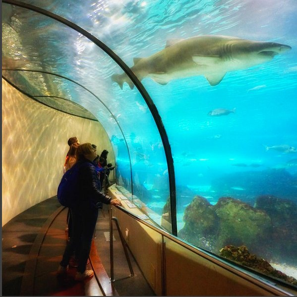 @gunnks73 Shark watching #barcelonaaquarium #sharktunnel #barcelona #visitbarcelona #loves_barcelona #ig_barcelona #igersbcn #catalunyaexperience #loves_catalunya #estaes_espania #turismospain #ok_spain #españaynadamás #igersspain #wu_spain #visitspain #super_spain #ig_spain #icu_spain #loves_spain_team #total_spain #citybestpics #topworldtravelpics #igtravel #worldtourists #goneAwol #worlderlust #aquariumbarcelona