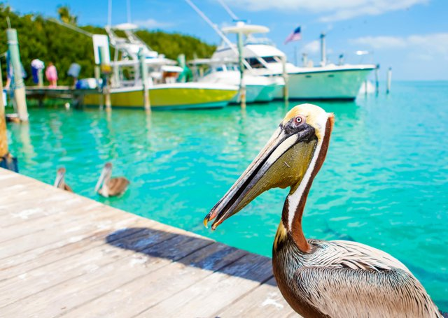 FLORIDA KEYS: GONE FISHIN'