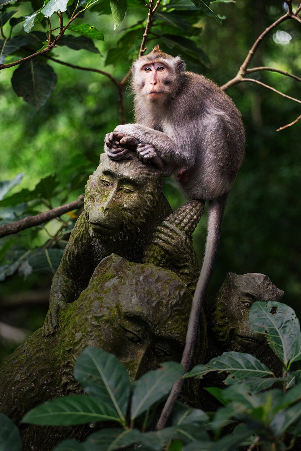 JI. Monkey Forest i Ubud.